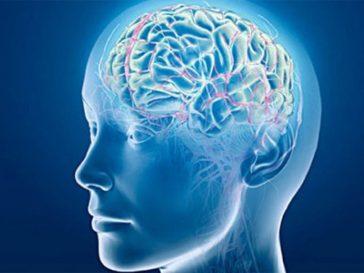 agua-y-cerebro